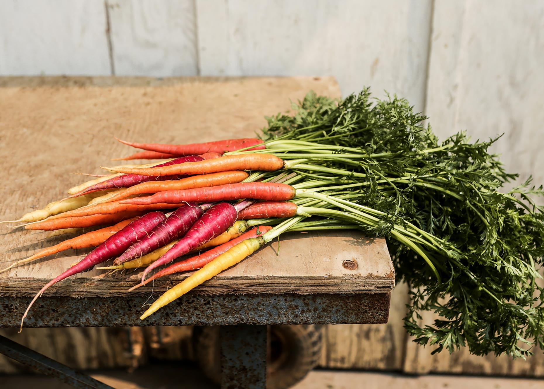 Rainbow-Carrots-Farm-Food-Fresh-Photography-Photographer-Rick-Holbrook-Still-Life-NYC-New-York